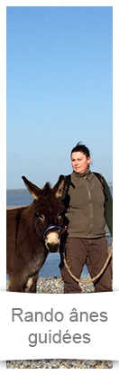 Donkey Guided Walks