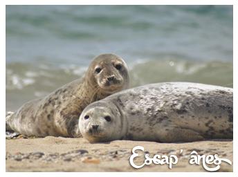 site de rencontre pour les phoques de la marinequalité datant Sims